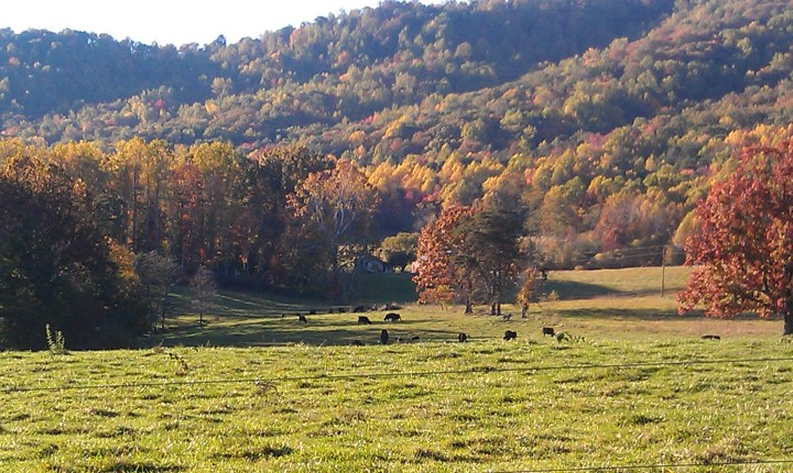 Cows in the neighbor's field
