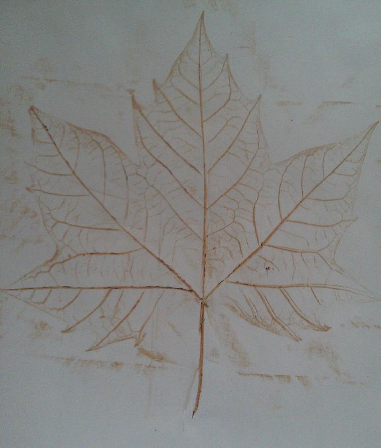 Sycamore Leaf Rubbing