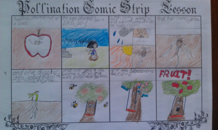 A Comic Strip approach to the process of pollinating and seed production.