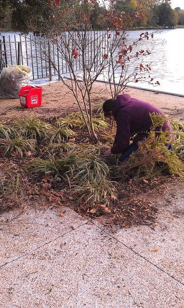 Pulling weeds!