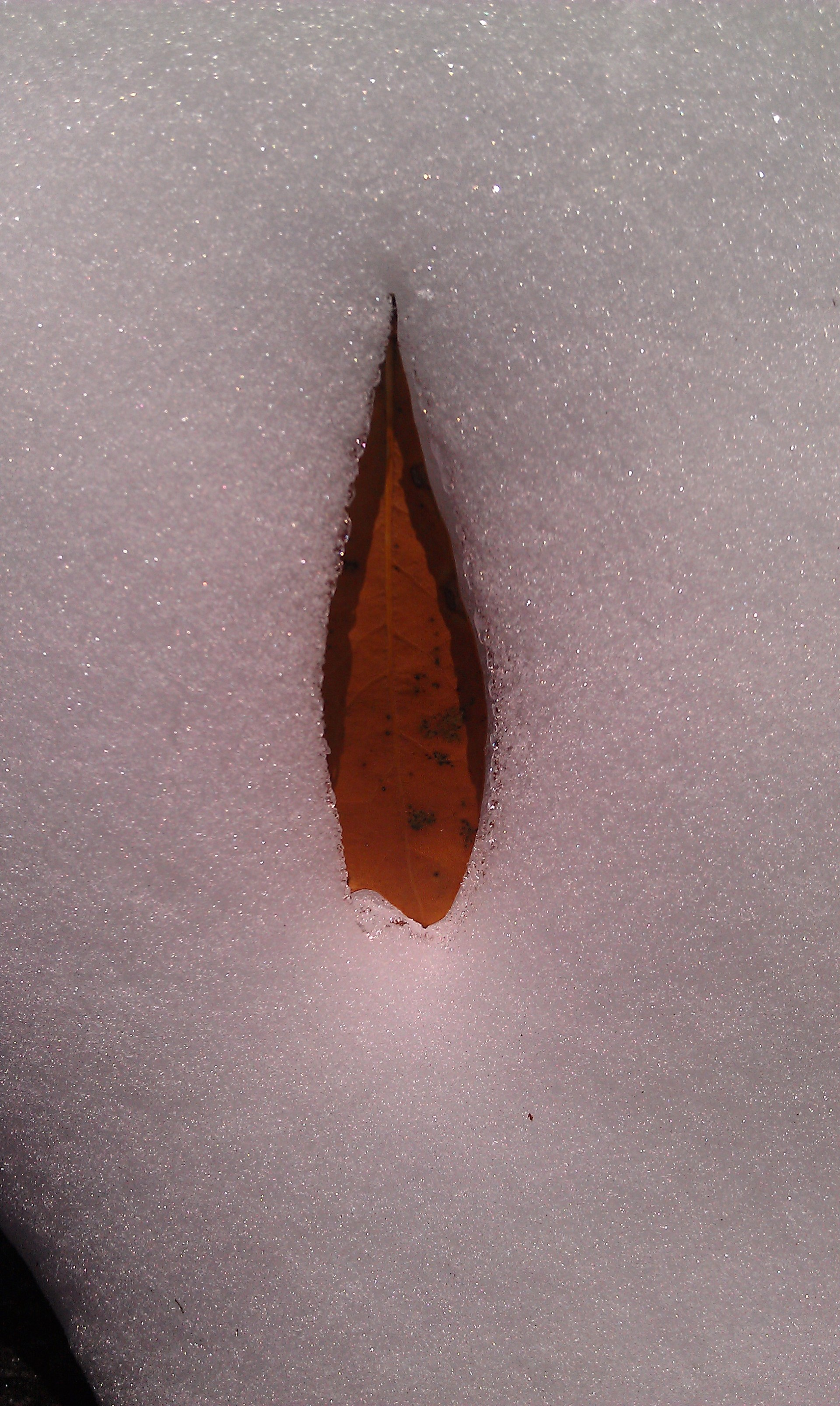 Falling, leaf on snow