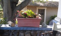 My Shade Lovers Planter