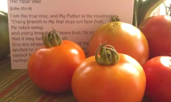 Mr. Garner has yummy tomatoes!