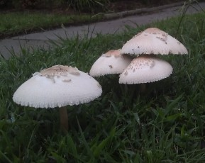 September morning mushrooms