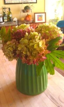 Hydrangeas from the yard