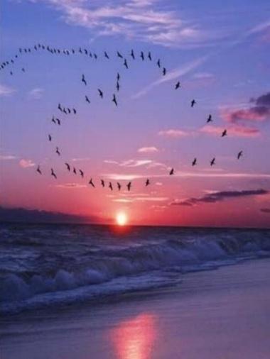 bird-heart