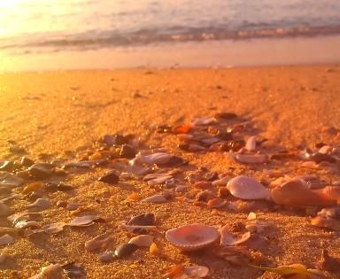 Golden sands gleaming shells
