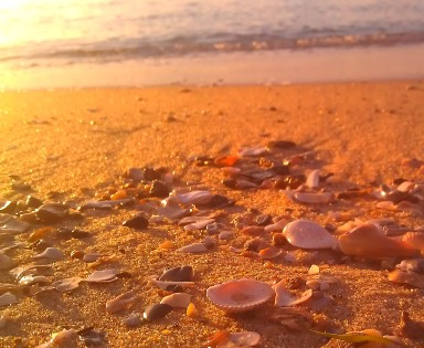 Golden sands gleaming shells