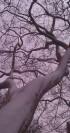 Snow lined limbs