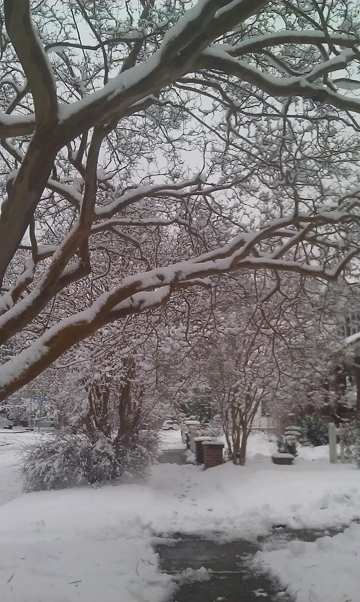 Snowy Sidewalk in Lafayette Winona