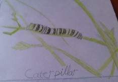 Caterpillar Nature Sketch