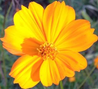 Morning Walk Flower