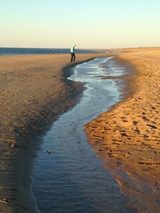 An everchanging beachscape