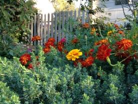 Neighbor's Fall Garden